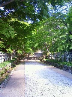 Imo_katsuouji3