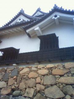 Imo_hikone2