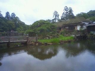 Imo_hikone6