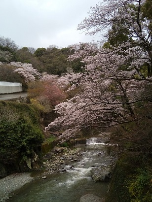 Imo_fushio3